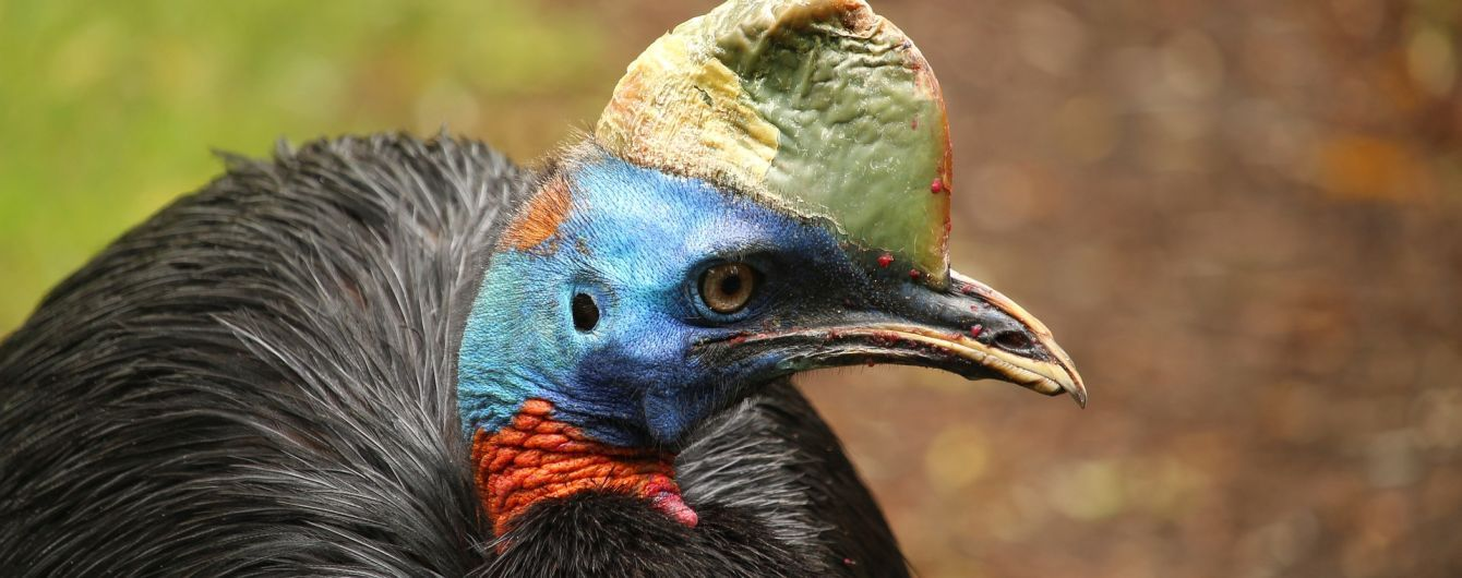 """В США """"самая опасная птица мира"""" убила своего хозяина"""