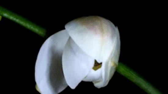 Аби орхідеї цвіли: метод бича і калача