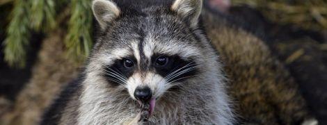 Опасность контактных зоопарков. Выяснилось, что их посетители могут подхватить неизлечимые бактерии