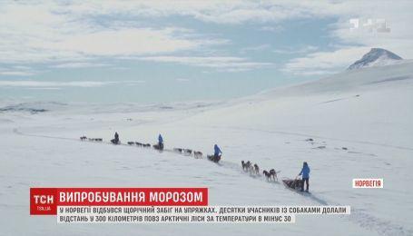 Випробування полярним морозом: у Норвегії відбулися перегони на упряжках