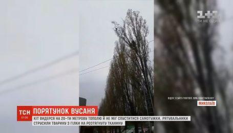 В Николаеве спасатели сняли кота с верхушки дерева