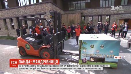 Работники китайского заповедника отправили медведя в венский зоопарк