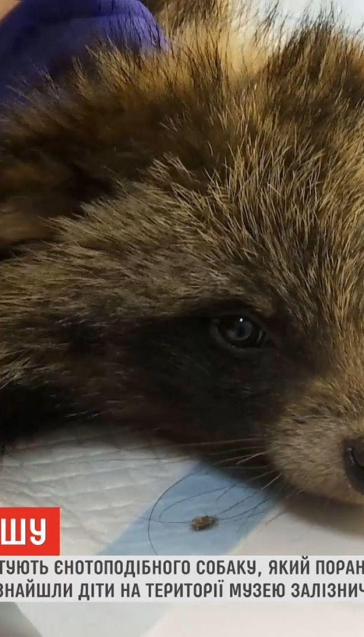 Харьковские волонтеры спасают енотовидную собаку