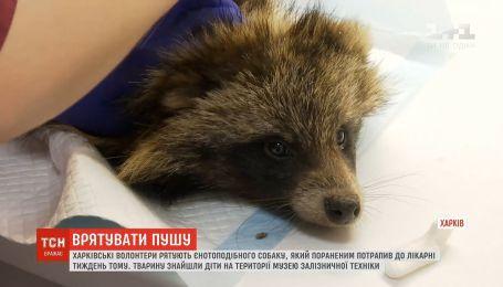 Харківські волонтери рятують єнотоподібного собаку