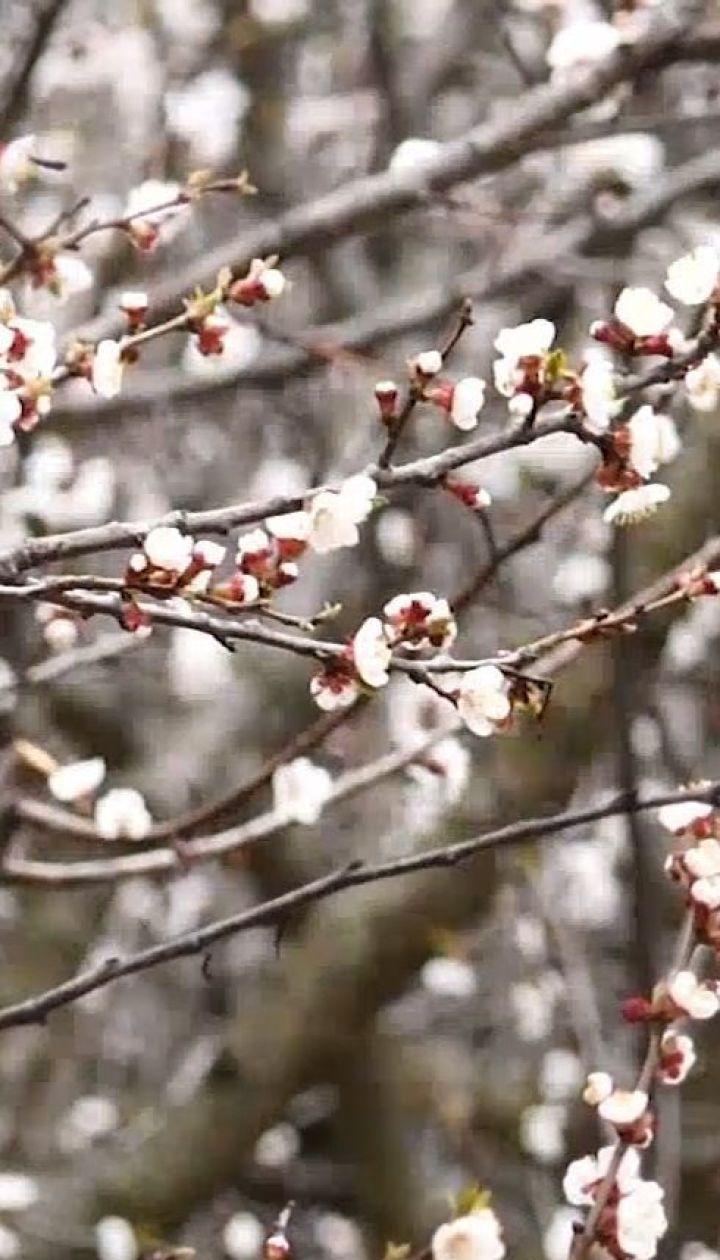 Сади в зоні ризику: як похолодання вплине на врожай плодових дерев