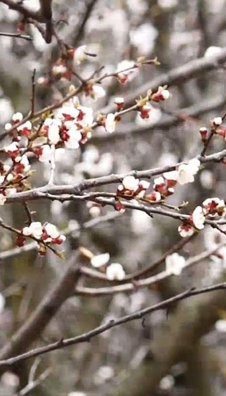 Сады в зоне риска: как похолодание повлияет на урожай плодовых деревьев