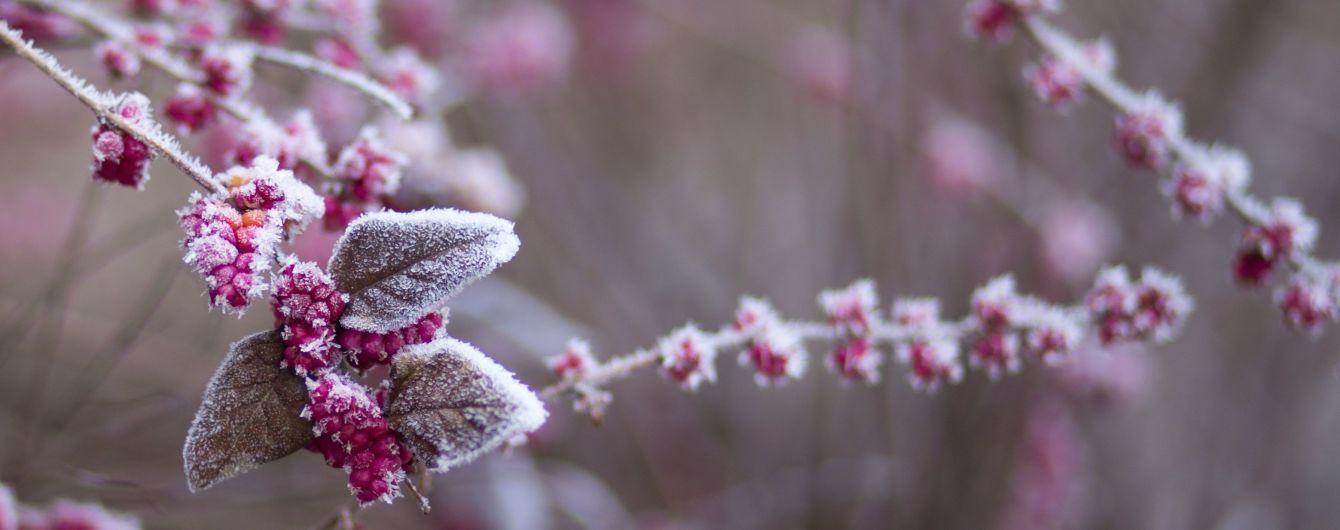Метеорологи предупредили о сильных заморозках в Украине