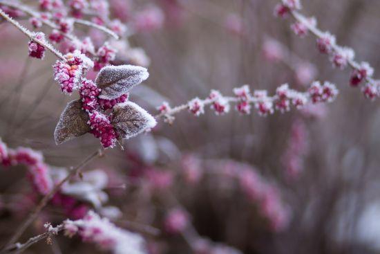 Новий тиждень принесе Україні перші сніги та заморозки. Прогноз погоди до 23 вересня