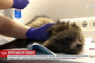 В Харькове спасли енотовидную собаку, которая вышла в город в поисках пищи