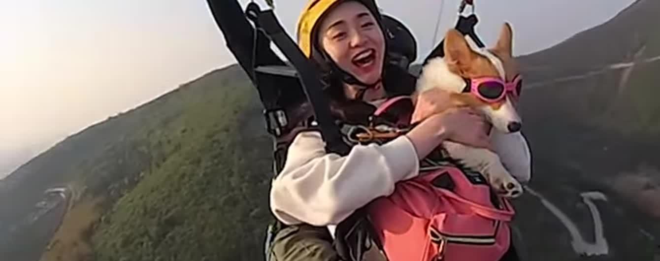 В Китае для собачек корги устраивают экстремальные полеты на парапланах
