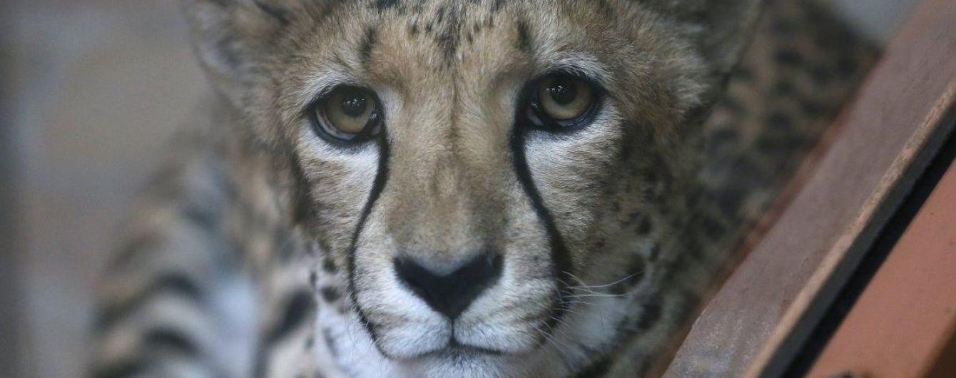 Учені довели, що у контактних зоопарках можна підхопити небезпечну хворобу. Зоозахисники виступають за їхню заборону