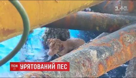 В 200 километрах от берега: в Таиланде заметили собаку в открытом море
