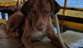 В Таиланде спасли собаку, которая оказалась в море в 220 км от берега