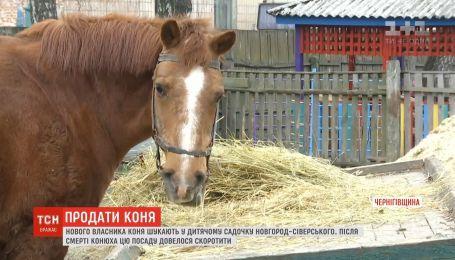 Дитсадок Новгород-Сіверського шукає нового власника для коня на ім'я Хлопчик
