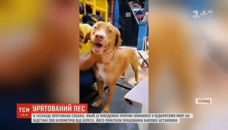 В Таиланде спасли собаку, который оказался в открытом море в 200 километрах от берега
