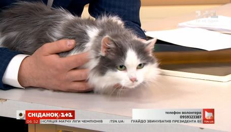 Кошечка Ася ищет семью