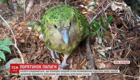 В Новой Зеландии пытаются уберечь от исчезновения какапо, или совиного попугая