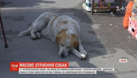 20 тысяч гривен за информацию об отравленных собаках предлагают в Нежине