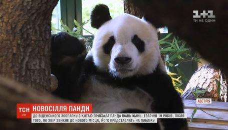 В венский зоопарк из Китая приехала панда Юань-Юань