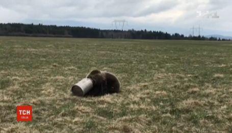 Медведь застрял в канистре и бродил так лесом в Словакии