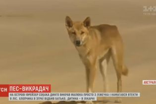 В Австралии собака динго похитила ребенка прямо из кроватки и тащила его в лес
