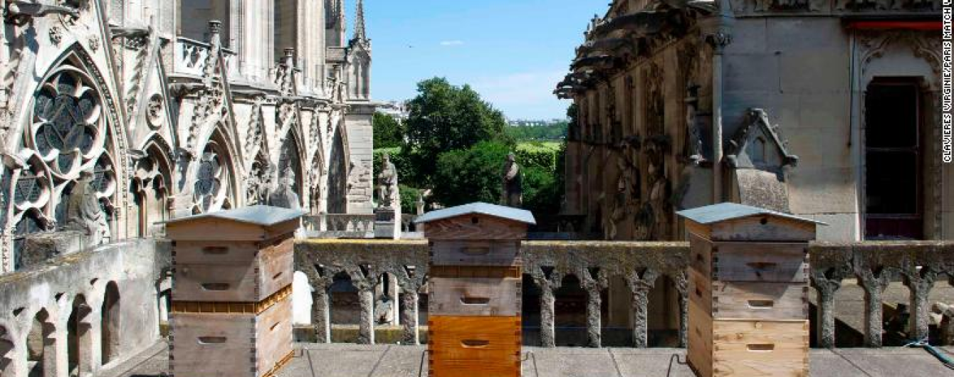 Тысячам пчел на крыше собора Парижской Богоматери удалось пережить пожар