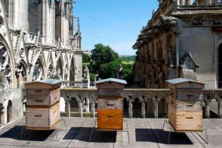 Тисячам бджіл на даху собору Паризької Богоматері вдалося пережити пожежу