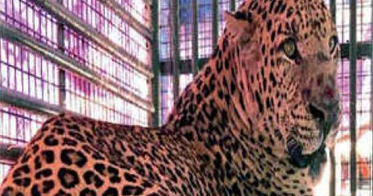 В Индии леопард обезглавил 9-месячного младенца, который спал рядом с матерью