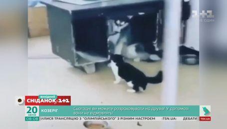 """Смешные видео домашних любимцев от зрителей """"Сніданку з 1+1"""""""