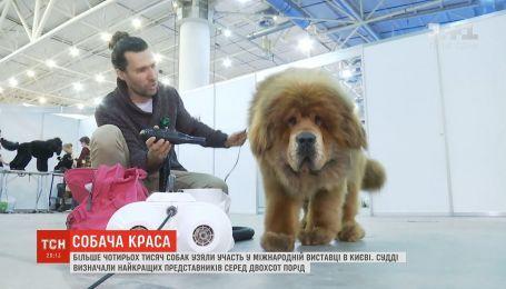 Міжнародна виставка собак відбулась у Києві