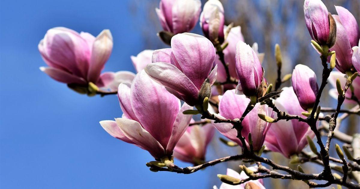 Сонячно та до 16 градусів тепла: прогноз погоди на неділю, 11 квітня