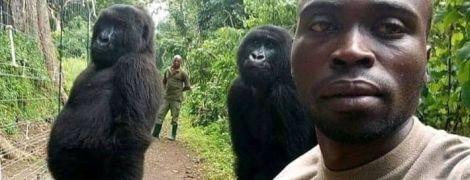 """Селфи года: в Конго волонтер сделал фото с гориллами, которые стоят в """"человеческой позе"""""""
