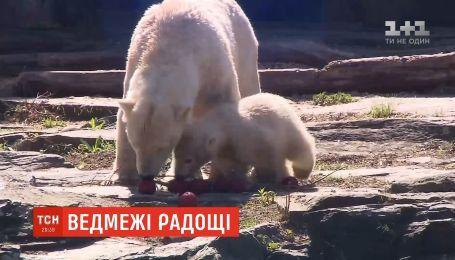 Работники Берлинского зоопарка угостили полярных медведей пасхальными яйцами из льда