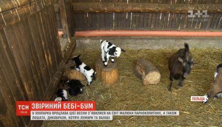 Зоопарк Вроцлава похвастался своими маленькими жителями, родившихся этой весной