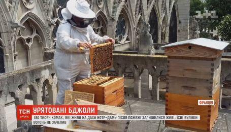 180 тисяч бджіл, які жили на даху Нотр-Даму, вижили під час пожежі