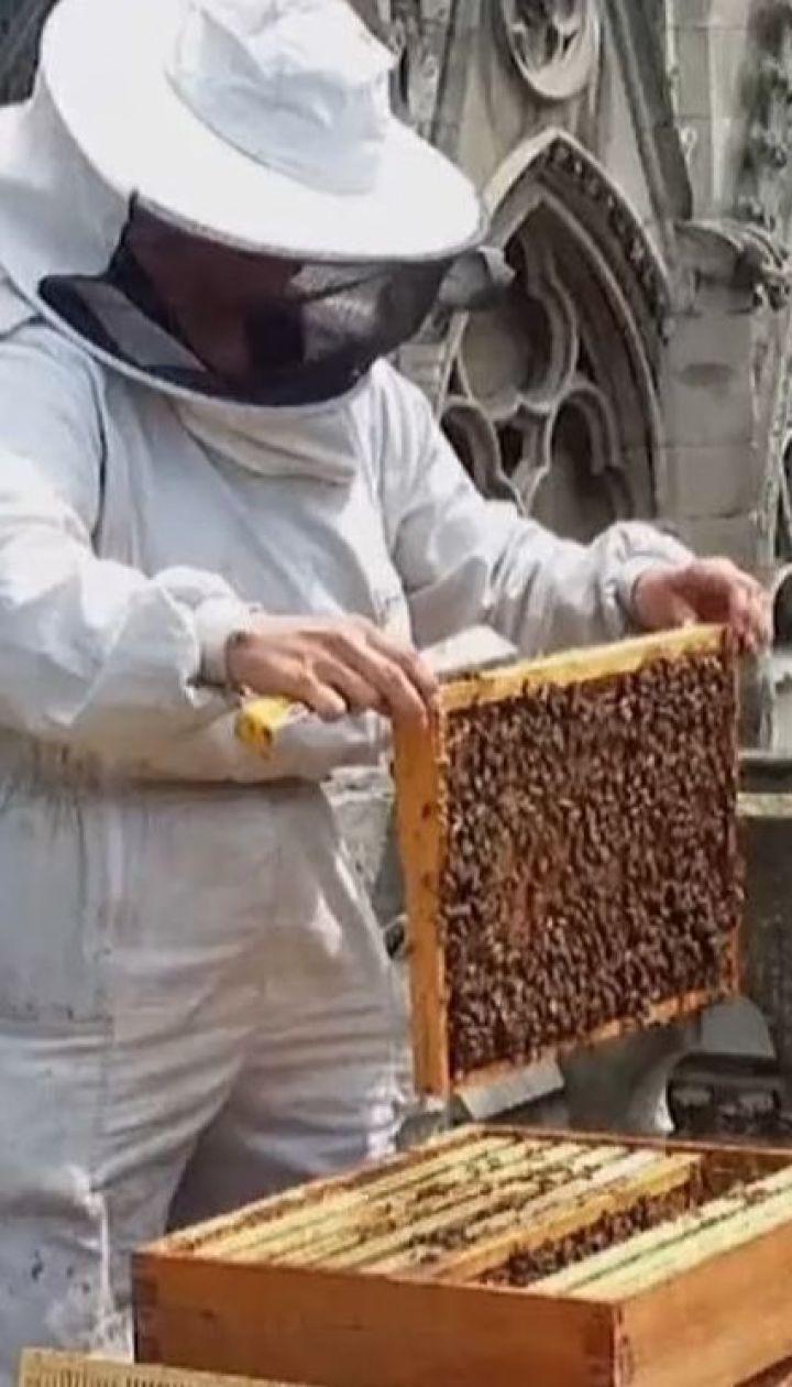 180 тысяч пчел, которые жили на крыше Нотр-Дама, выжили во время пожара