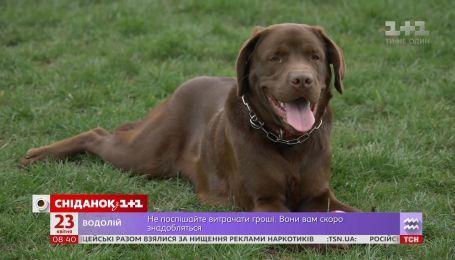 Чому чеські міста - комфортне середовище для собак та їхніх власників