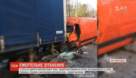 Лось вибіг на дорогу і спровокував подвійну аварію на Житомирщині
