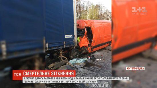 На Житомирщині через лося сталася подвійна аварія: є загиблий