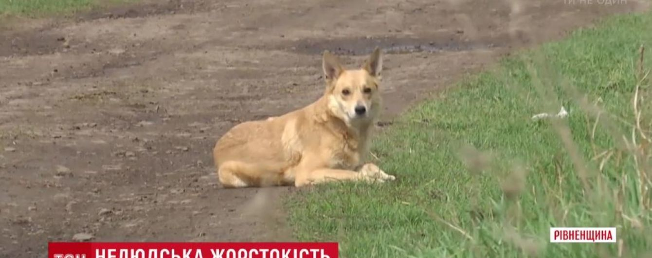 На Ровенщине женщина купила дом и закрыла в нем с десяток собак без воды