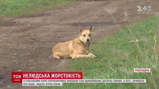 На Рівненщині жінка купила хату і зачинила в ній з десяток собак без води