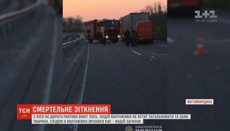 Унаслідок подвійної аварії на трасі Київ-Чоп загинули чоловік і лось