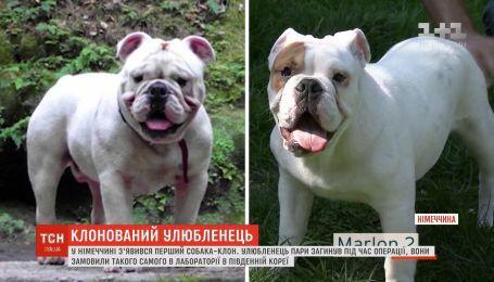 У Німеччині з'явився перший собака-клон