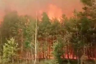 Огонь охватил один из крупнейших украинских заповедников