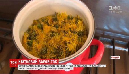 У румунському селі Біхор виготовляють з кульбаб сиропи та чаї