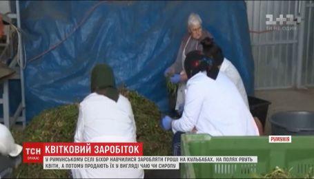 Румынские бизнесмены имеют неплохой заработок благодаря продаже полевых цветов