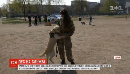 Лабрадора врятувала від смерті патрульна, тепер пес допомагає шукати вибухівку