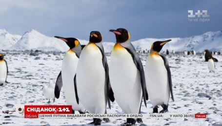 Цікаві факти про пінгвінів