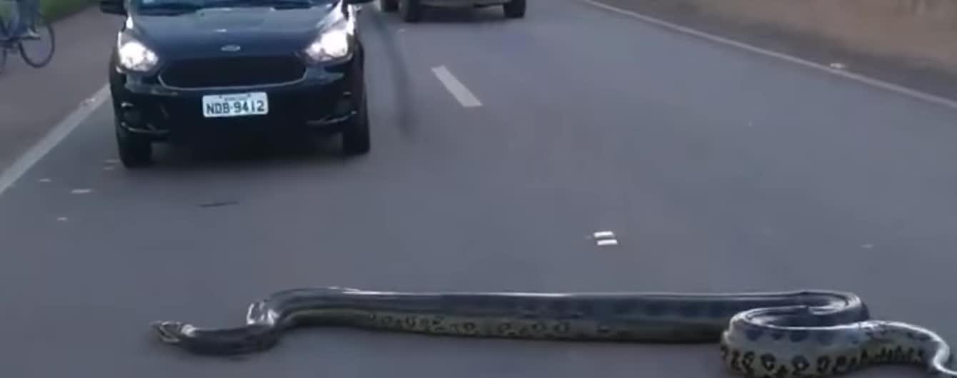 Принятие закона об украинском языке и пробки на дороге из-за гигантской змеи. Тренды Сети