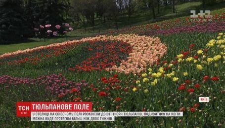 На Певческом поле в столице расцвели двести тысяч тюльпанов